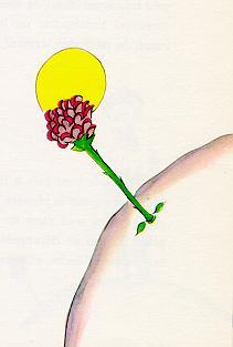 小王子 小王子图片 玫瑰花