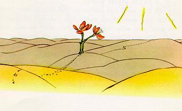 小王子 小王子图片 沙漠里的小花