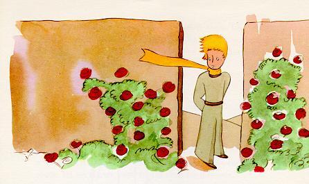 小王子 小王子图片 小王子来到一个玫瑰花园