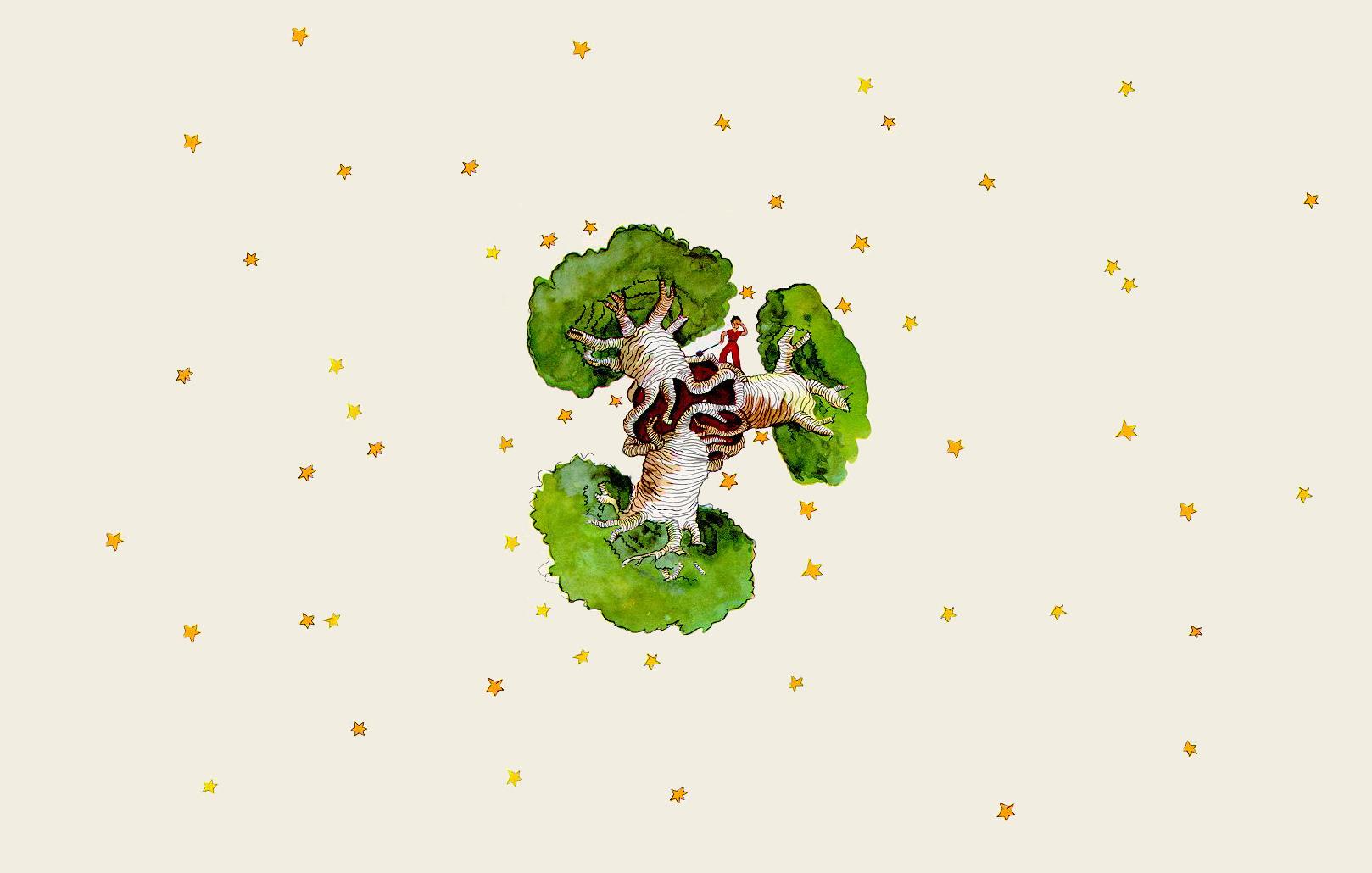 小王子 小王子电脑桌面壁纸,猴面包树的危害